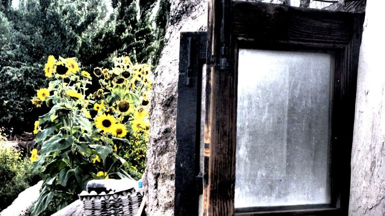 POLLEN PANE | Stunning sunflowers in full bloom in the middle of summer in the Himalayas | Leh