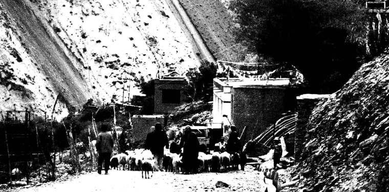 Villagers corralling livestock to a river in Ursi | Ladakh